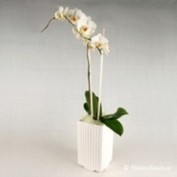 Underbart arrangemang med orkidé