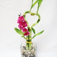 Orchid & Lucky Bamboo
