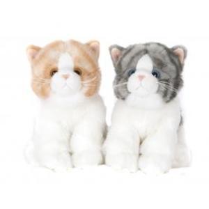 Små kattungar