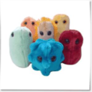 Bacillusk-nallar