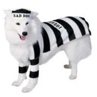 Tuff fånge-dräkt för hunden