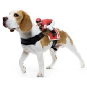 Jockey-sele för hunden