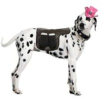 Ölbärar-sele för hunden