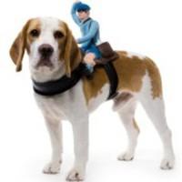 Sele för hunden med en postgubbe på ryggen