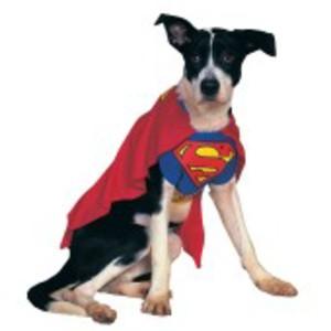 Officiell, häftig Stålmannen-dräkt för hunden