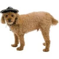 Sockersöt sombrero för hundar