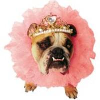 Drottning-dräkt för hunden