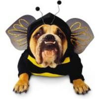 Dundersöt bi-dräkt för hunden