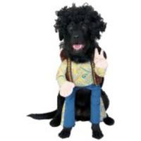 Lustig hippie-dräkt för hunden