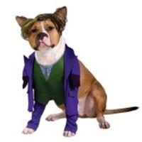 Tuff Jokern från Batman-dräkt för hunden