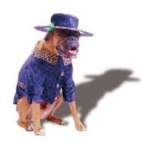 Pimp-dräkt för hunden