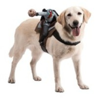 Den huvudlöse ryttaren-dräkt för hunden