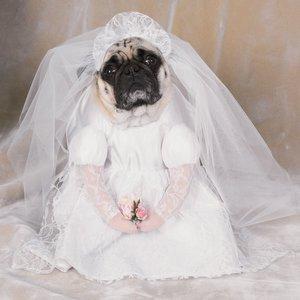 Brudkostym (för hundar)